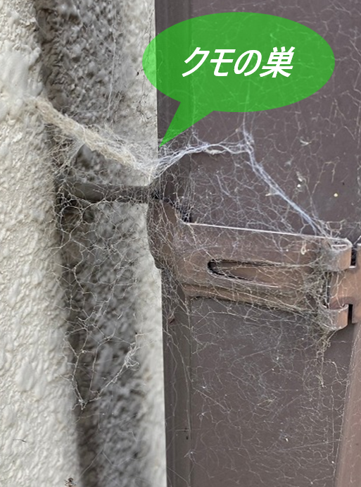 付帯部のクモの巣