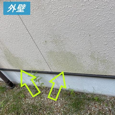 外壁のコケや汚れ