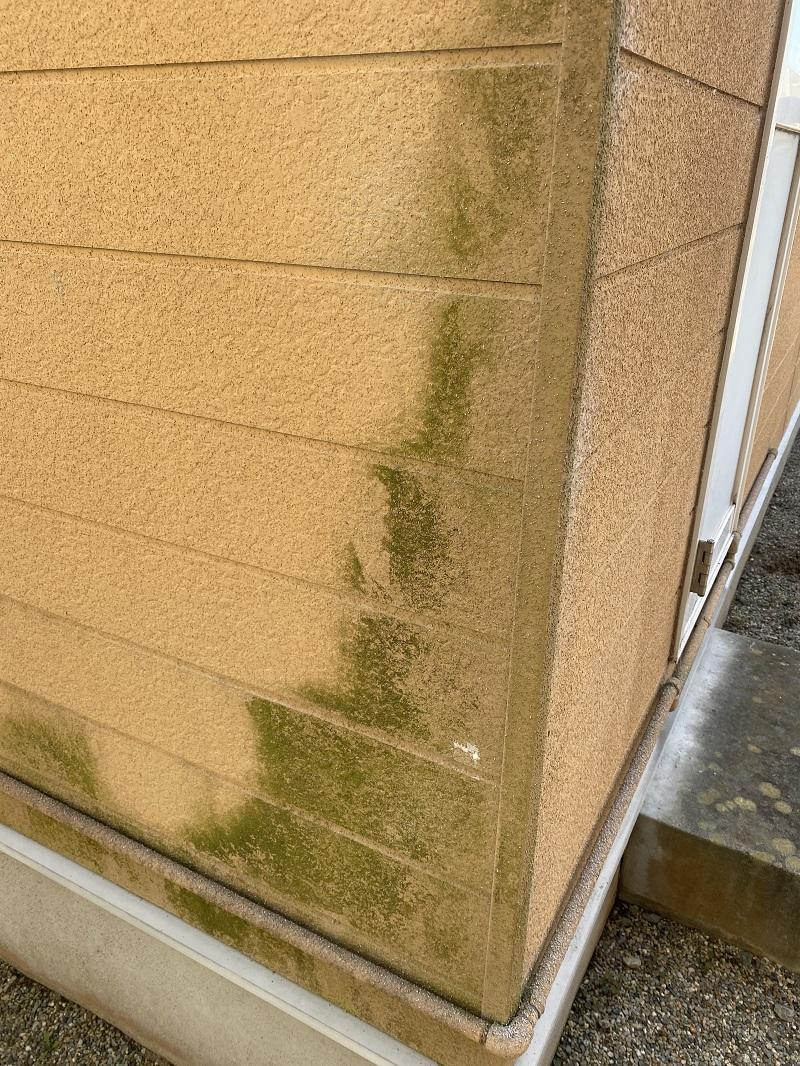 壁についた苔の様子