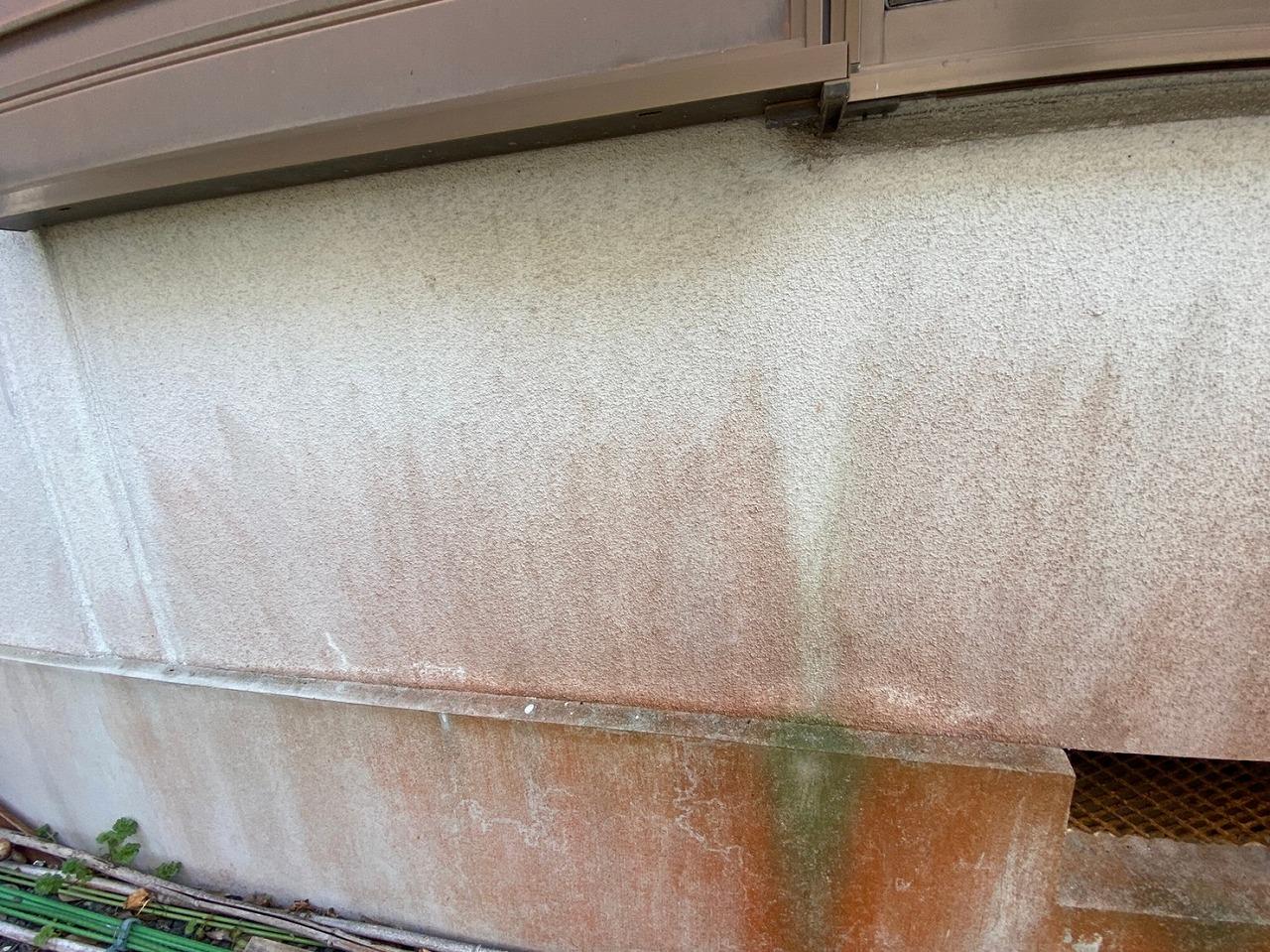 外壁のカビやコケの繁殖